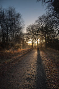 Cycle Path Sunrise by David Tinsley