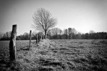 Baum by Bernhard Rypalla