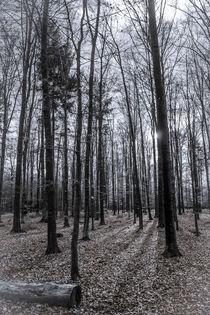 Herbstwald - forrest in fall von Bernhard Rypalla