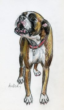 This Boxer can Sing! by Deborah Willard