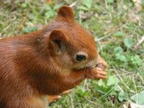 'Eichhörnchen' by Yven Dienst