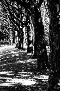 Bäume in einer Reihe, Schatten und Licht von Denise Urban