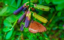 Schmetterling im Garten von Gina Koch