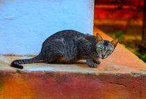 Wachsame Katze in einem Tempel von Gina Koch