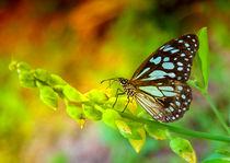 Tropischer Schmetterling im Grünen von Gina Koch