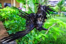 Ein toter Vogel hängt tot im Seil ... von Gina Koch