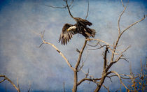 Eagles Soar by Barbara Magnuson & Larry Kimball