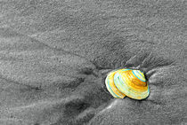 Seashell-in-the-sand