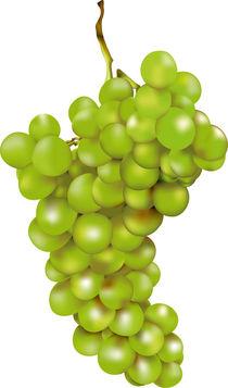 Grüne Weintraube by Gina Koch