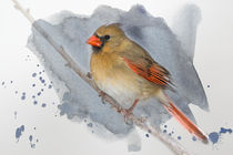 'Winter Northern Cardinal' by Betty LaRue