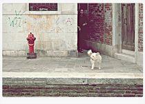 dog  by Manuela Russo