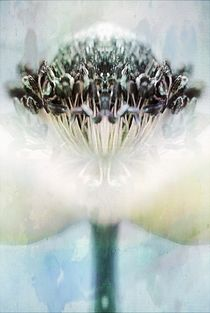 Anemone01