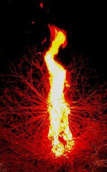 der kranich in der flame von siegi kleindienst