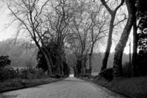 cobbleston road lined with trees  by Joseph Amaral