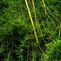 Wilder Bambus von Gina Koch
