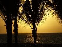 Sunrise Palms, Playa del Carmen Mexico by Tricia Rabanal