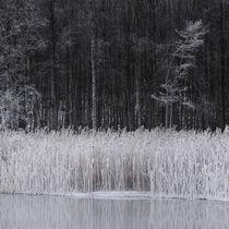 Frosty reeds von Mikael Svensson