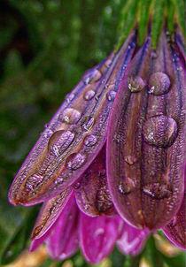 Macro Raindrops. by rosanna zavanaiu