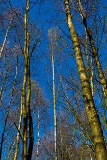 Clr-trees-epp-hi