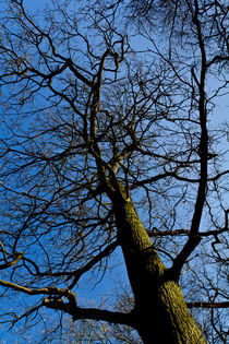 Wild-wood-tree-hi