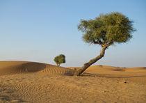 A tree in an Arabian desert by Victoria Savostianova