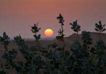 Sunset in the desert by Victoria Savostianova