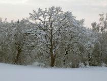 Winterzauber by aidao