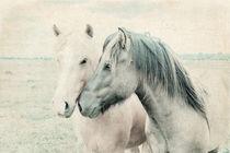 Pferde Islandpferde von pahit