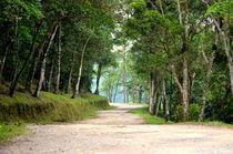 Atlantic Forest by Paulo Zerbato