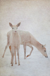 Hirsche im Schnee by pahit
