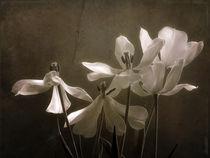 ein letztes Mal... by Franziska Rullert
