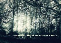Faerie Wood von Sybille Sterk