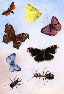 Butterflies, Schmetterlinge by Denitza Gruber