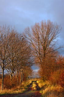 Herbstweg - fall away by ropo13
