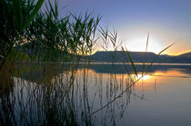 Reed sunset by linconnu