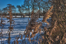 Winterlandschaft von michas-pix