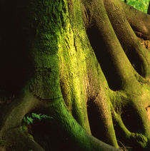 Green trunk by Intensivelight Panorama-Edition