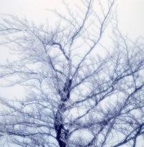 Winter tree von Intensivelight Panorama-Edition