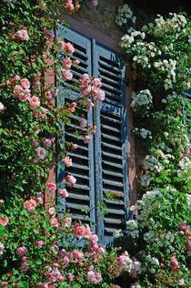 Rosenfenster von Bertold Werkmann