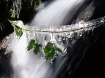 Frozen leaves by Intensivelight Panorama-Edition