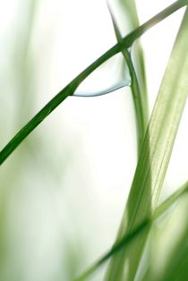 Dew drop on grass by Intensivelight Panorama-Edition