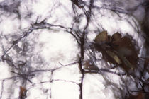 Autumn twigs - abstract von Intensivelight Panorama-Edition