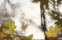 Blurry autumn leaves by Intensivelight Panorama-Edition