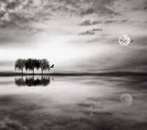 'Trees reflex' by Viviana González