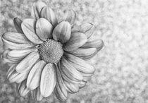 Flower with glittering background B&W von Maria Inden