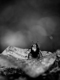 Bug von Maria Inden