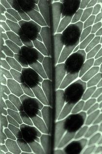 Blattstrukturen von Bastian  Kienitz
