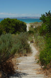 Beach Walk, Kangaroo Island by Philip Shone