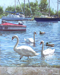 Painting-swans-and-boats-christchurch