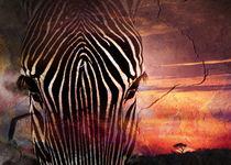 African-dreams8